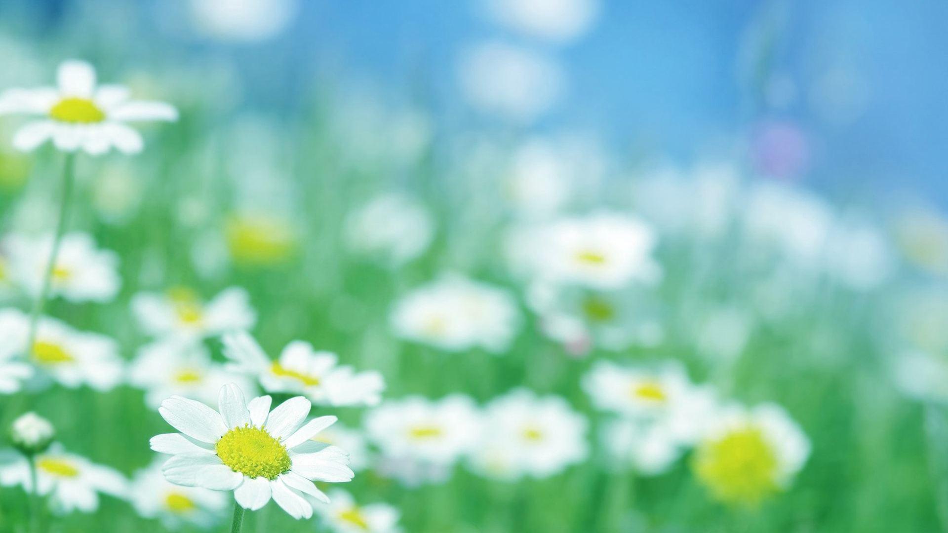 一起享受平凡生活的情感语录说说:愿平凡而善良的我们被生活温柔相待
