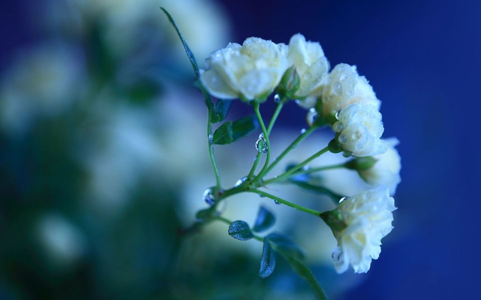 结婚周年纪念日情话表白肉麻甜蜜说说大全精选