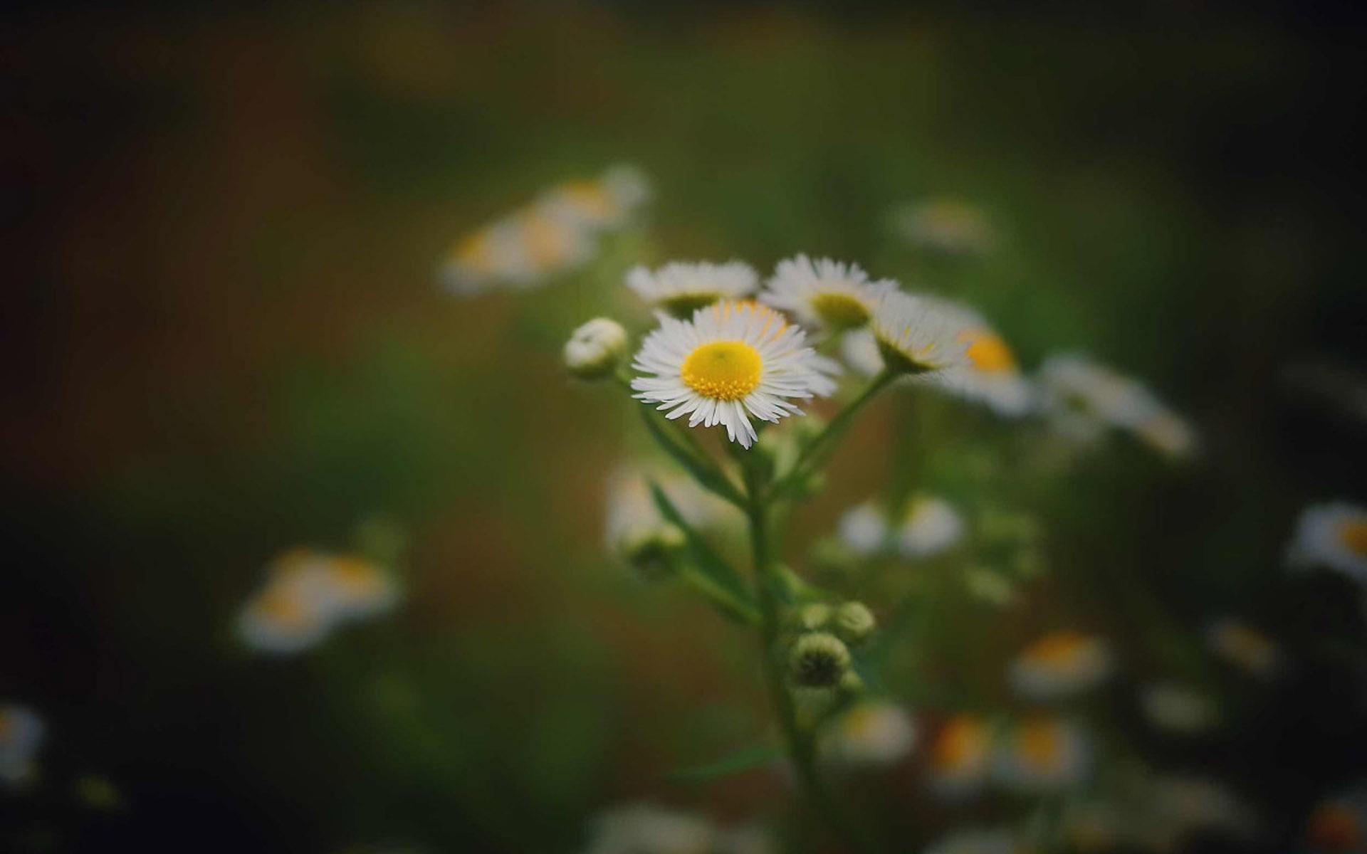 努力生活说说心情短语:愿,活着是幸运的