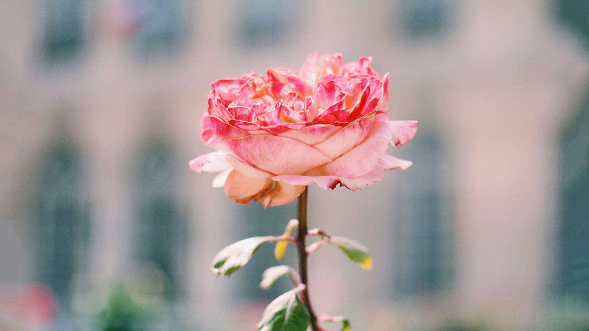 享受生活的情感语录说说心情:生活就是平凡且美好