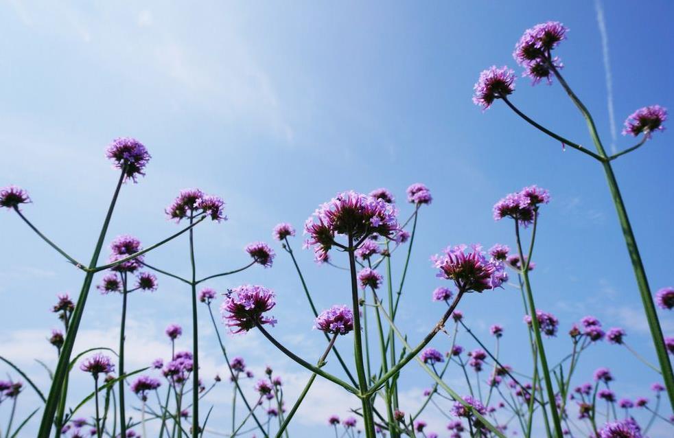 春天和好友一起去赏花的唯美句子说说大全