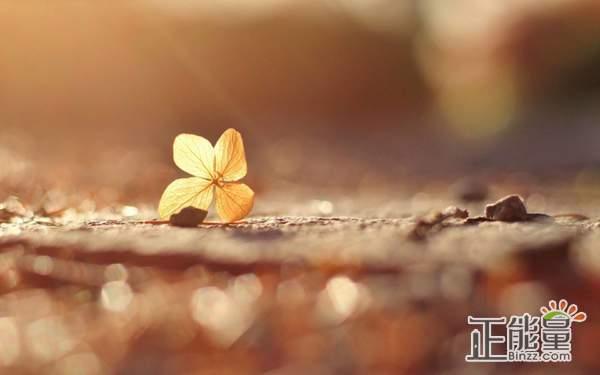致自己的人生感悟正能量说说:不要让自己在迷茫里徘徊不前