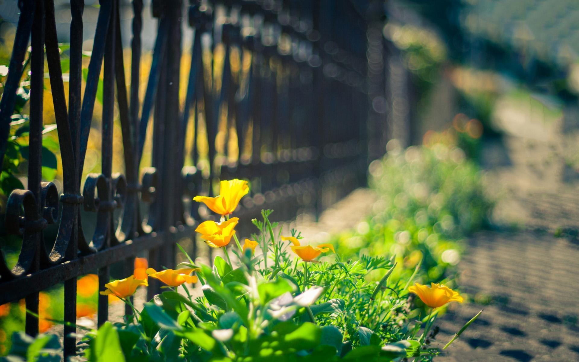 選擇放棄一個人的句子心情說說:回憶總是會不自覺在心里浮現