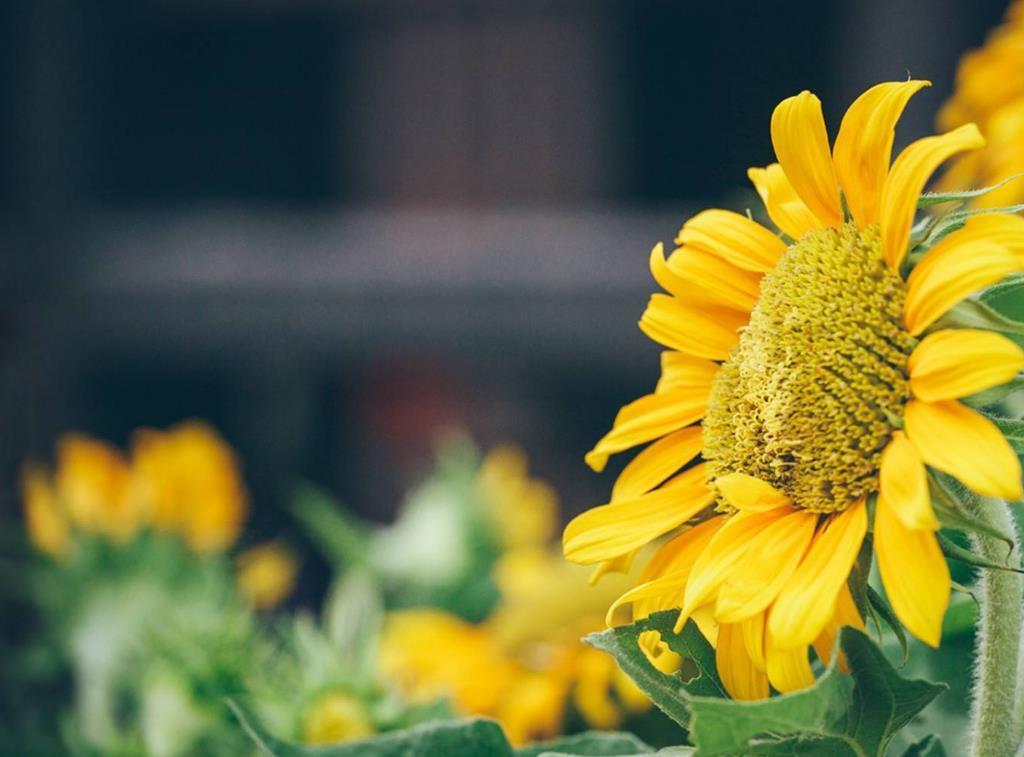 人总是在不断的成长感悟人生语录:哪怕只剩自己,也要笑对生活