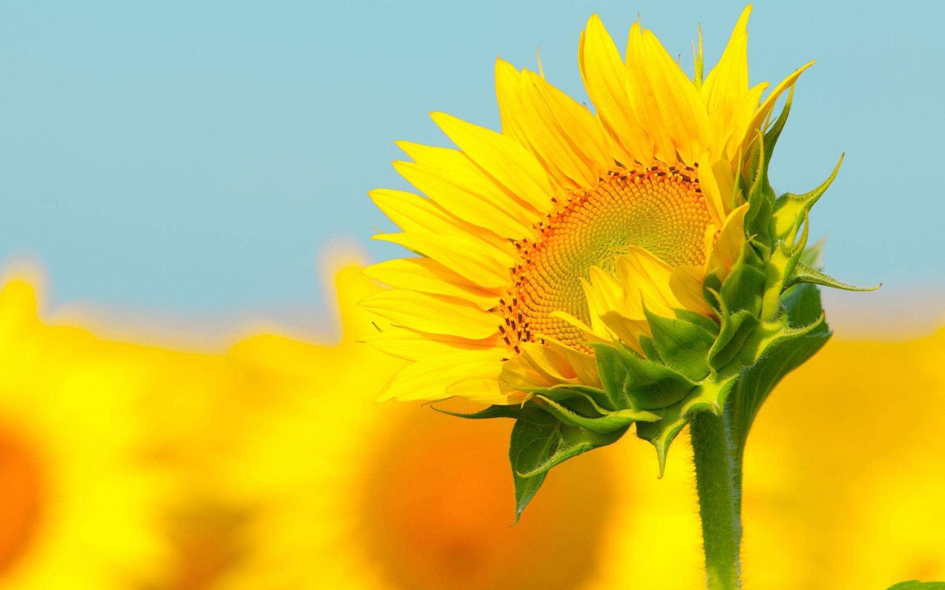 阳光积极向上的的早安励志语录:永远年轻,永远热泪盈