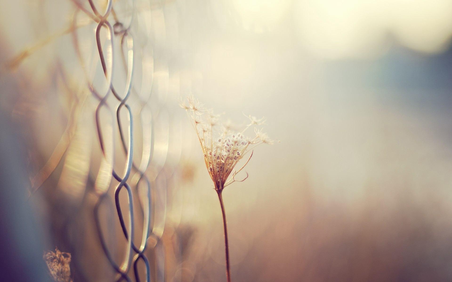 成长意味着失去的说说心情:无论朋友走得多远,我想我也在原点等你