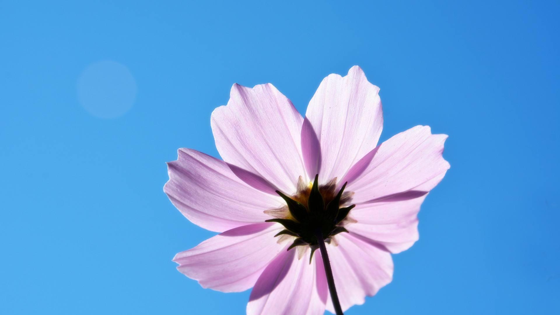 人生需要理想的生活感悟语录:向自己想要的出发
