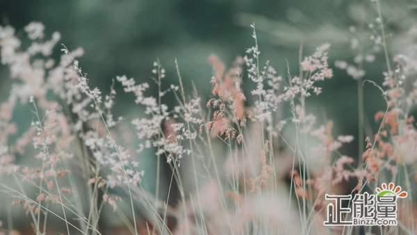 想放又放不下的说说伤感爱情语录:你是我曾放下所有爱过的人
