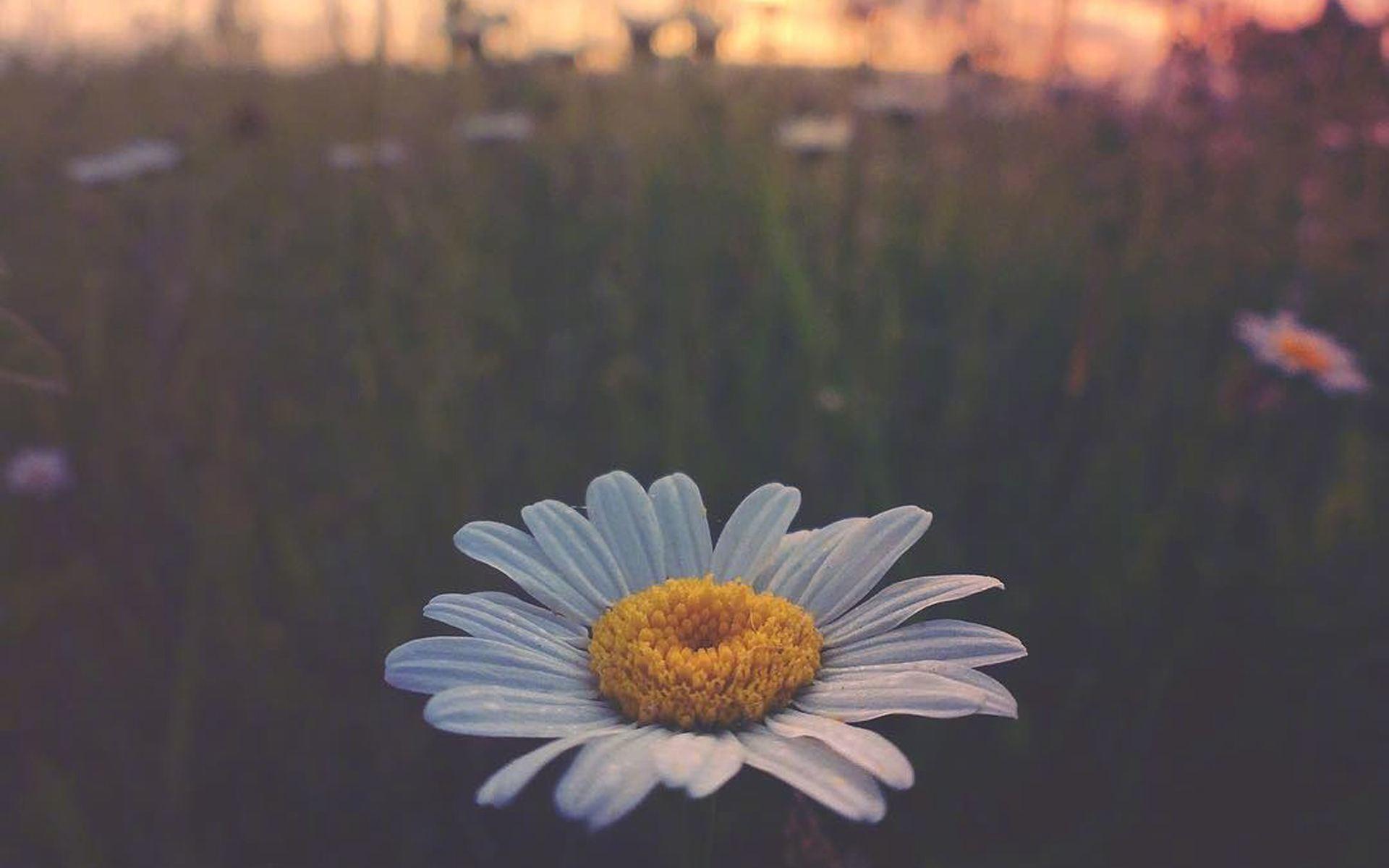 感悟成长的人生经典情感语录说说:积极向上每一天吧