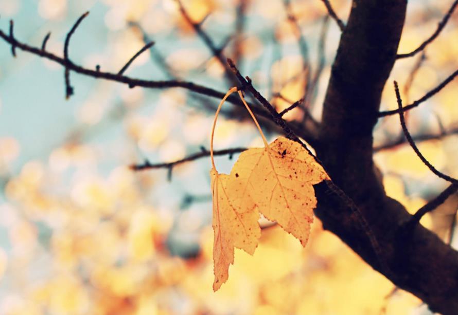人生不留遗憾的句子说说心情语录:生如夏花,死如冬凌
