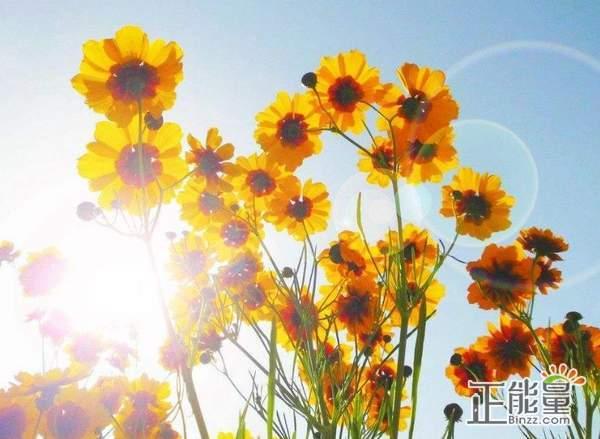 勇敢拥抱未来的正能量语录说说:一起去拥抱美好的明天